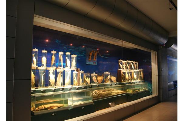 """舟山博物馆常设固定展厅""""舟山史迹陈列"""",""""百年老床陈列"""",""""海洋渔业"""